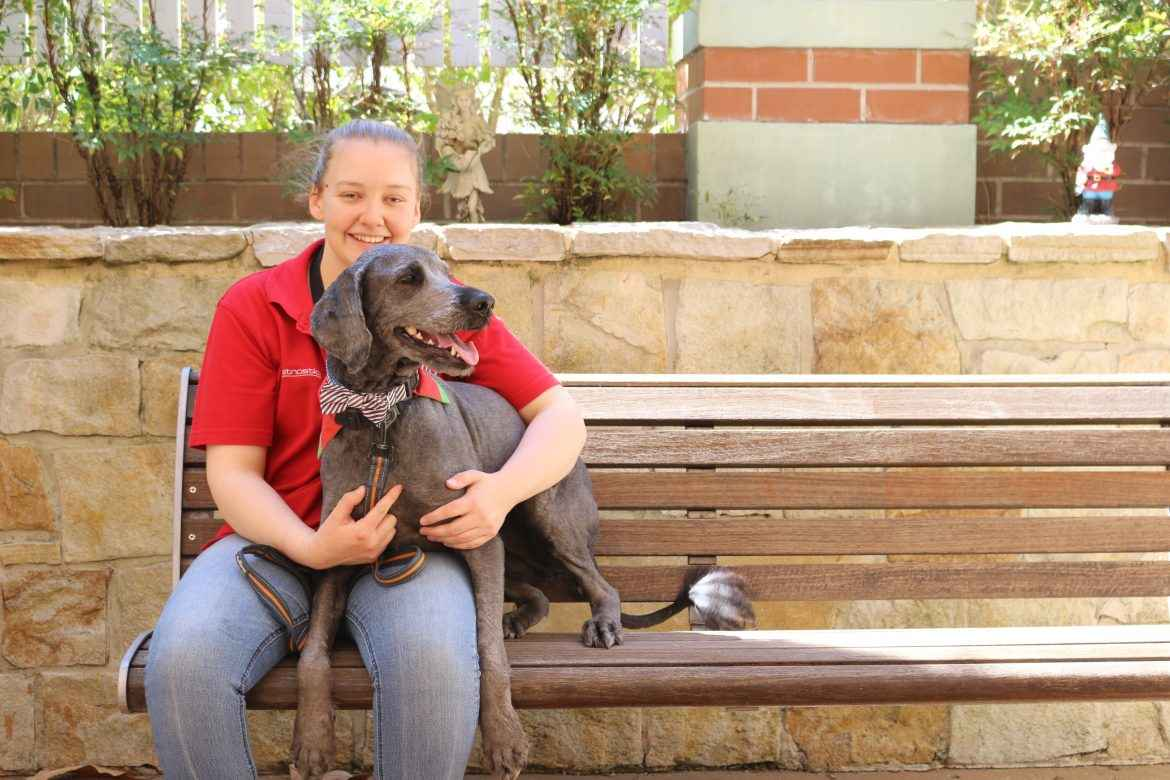 Rachel Laing has volunteered with her groodle Jackson in North Parramatta for almost three years,
